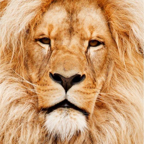 Active World Journeys - South African Safari